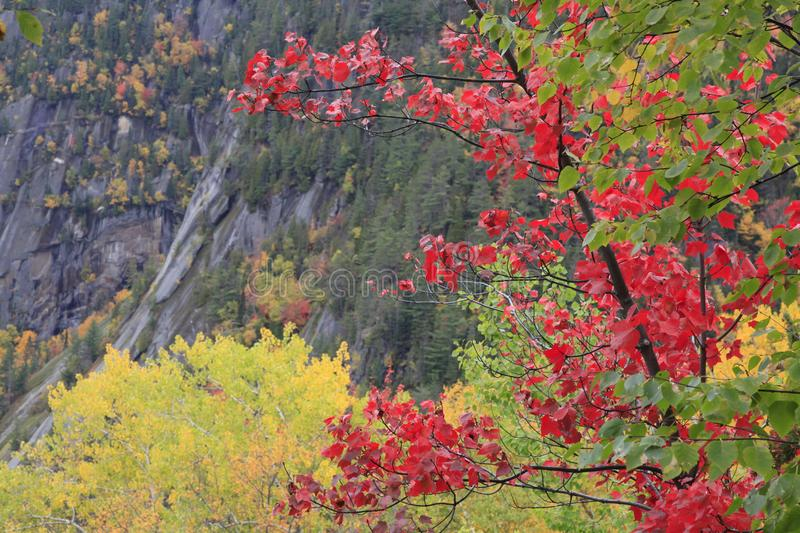 Autumn colors in Saguenay, Quebec royalty free stock photography