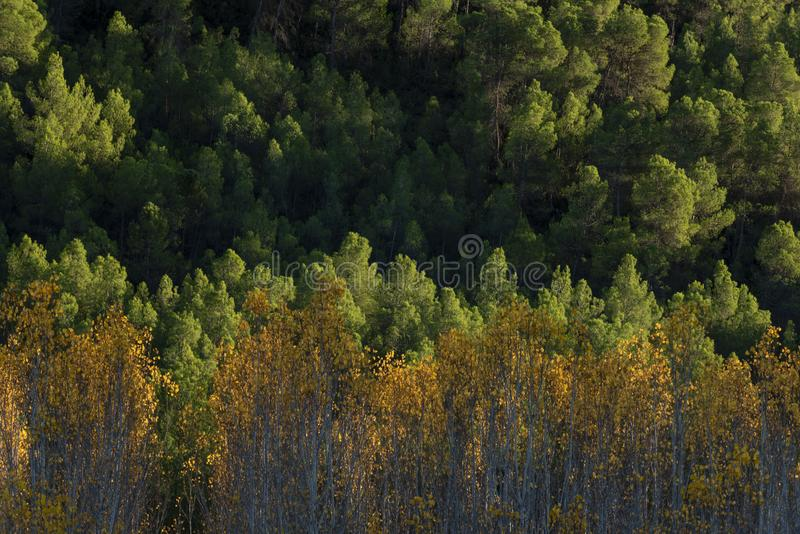 Autumn colors in Segura river, Sierra de los Molares, Yeste. Albacete province, Castilla-La Mancha. Spain royalty free stock image