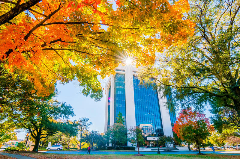 Autumn colors within southern city limits. In late november royalty free stock photos