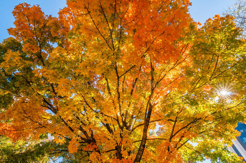 Autumn colors within southern city limits. In late november royalty free stock images