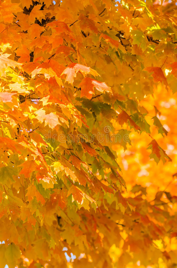 Autumn colors within southern city limits. In late november stock photography