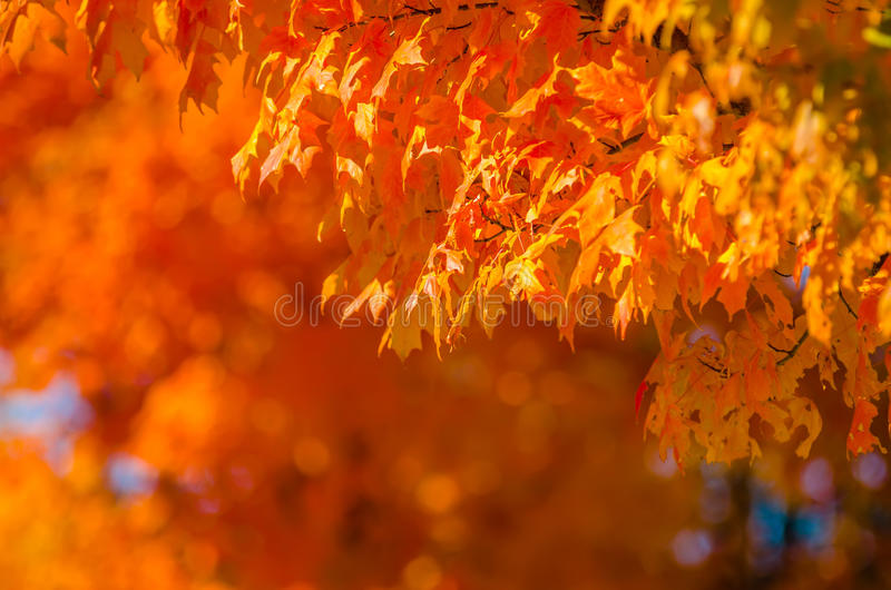 Autumn colors within southern city limits. In late november stock photos
