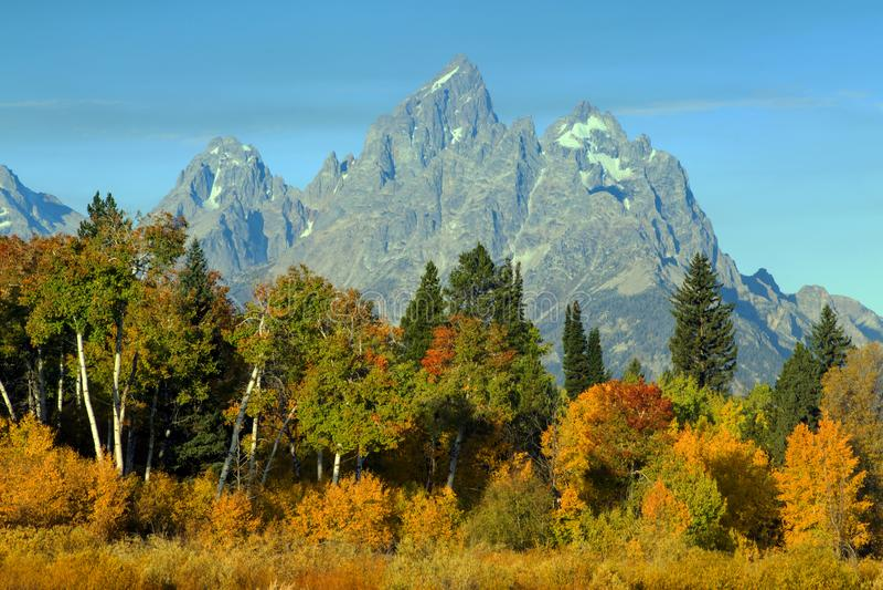 Autumn Colors storslagen Teton nationalpark, Wyoming arkivbilder
