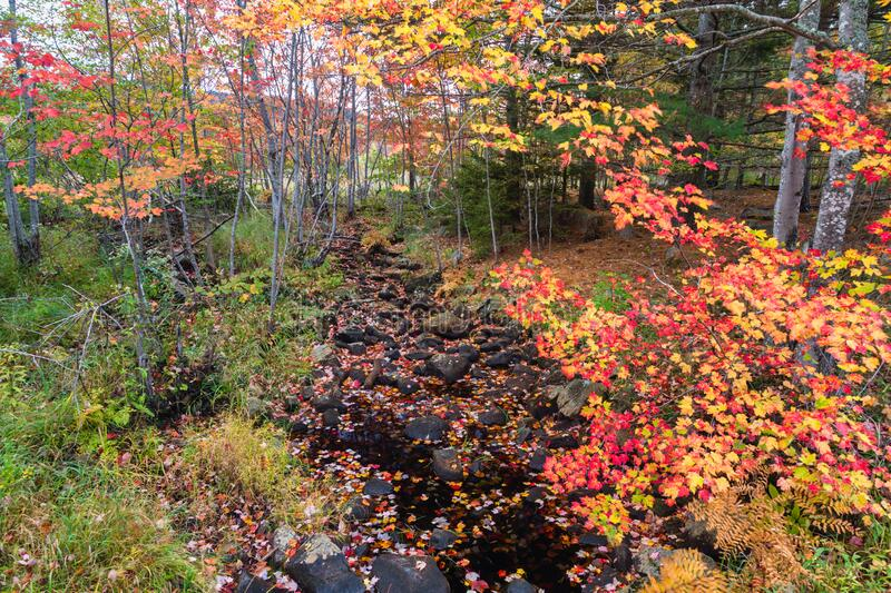 Autumn Colors & Stream on Duck Brook Road, Acadia National Park stock images