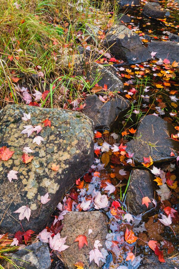 Autumn Colors & Stream on Duck Brook Road, Acadia National Park stock image