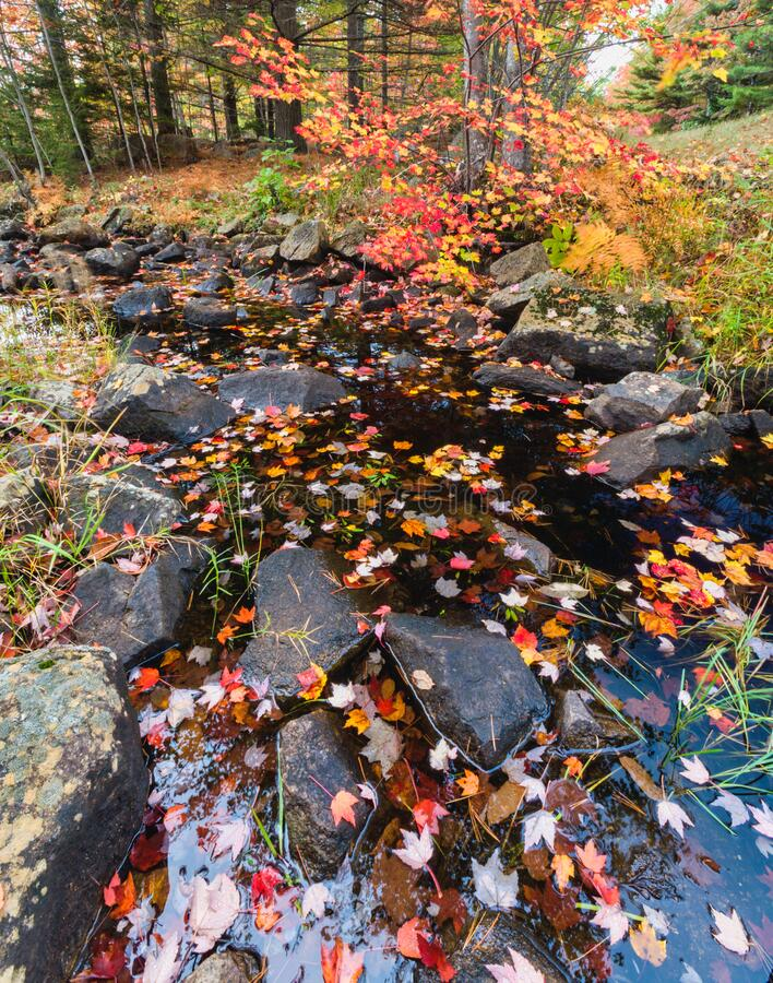 Autumn Colors & Stream on Duck Brook Road, Acadia National Park royalty free stock photos