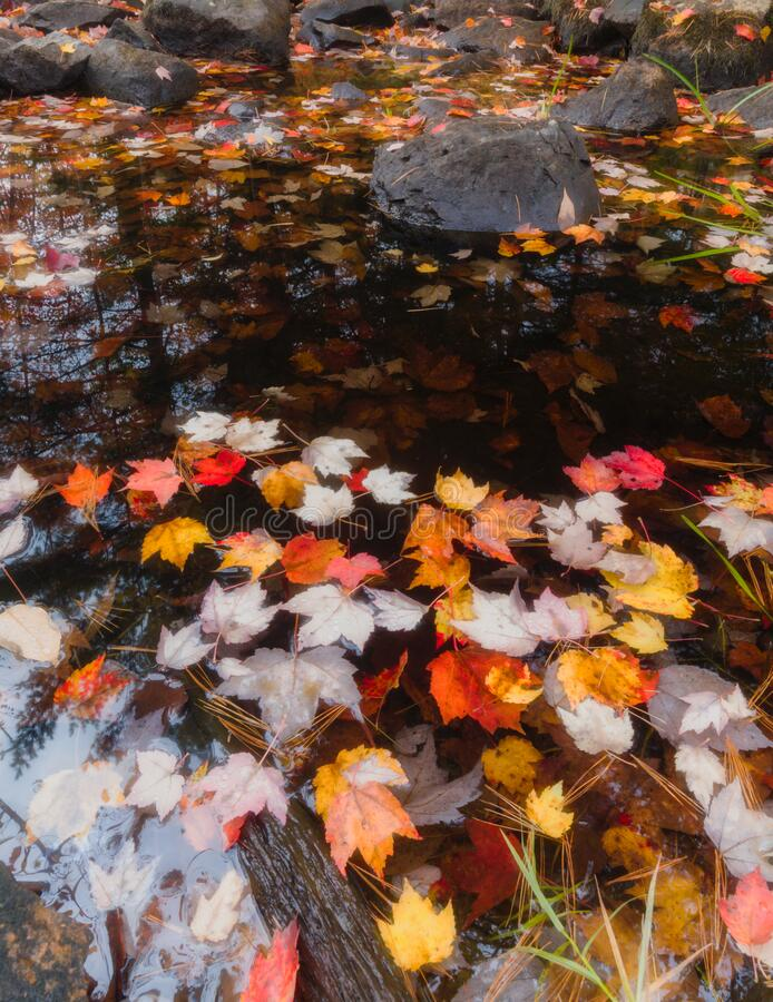 Autumn Colors & Stream on Duck Brook Road, Acadia National Park stock photography