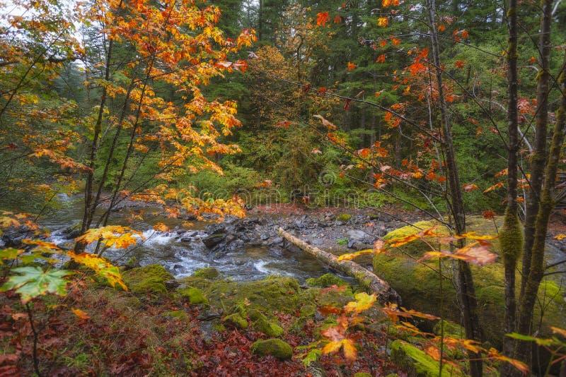 Autumn Colors sur le chemin détourné scénique de passage de passage-Santiam de McKenzie image stock