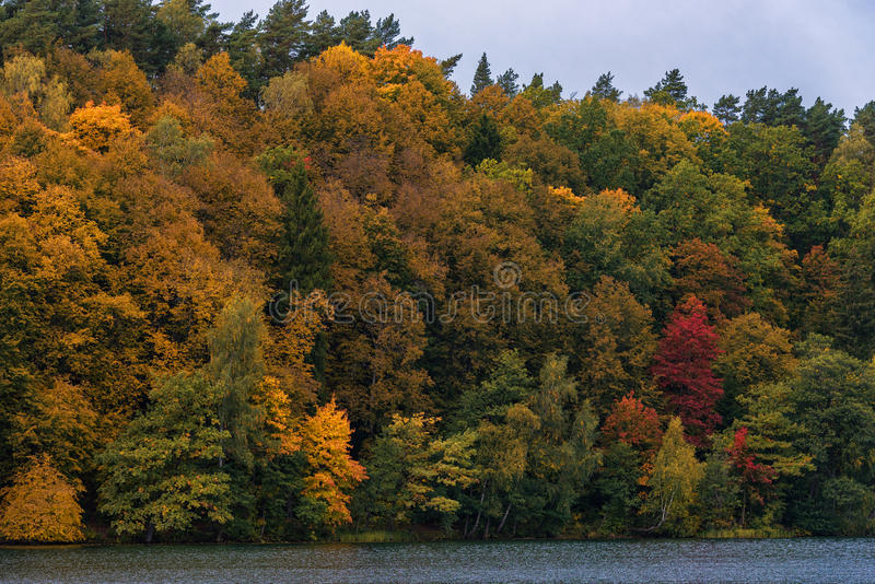 Autumn colors Tree and Forest in Lithunia. Zalieji ezerai. Landscape and Nature. Lake in foreground. royalty free stock images