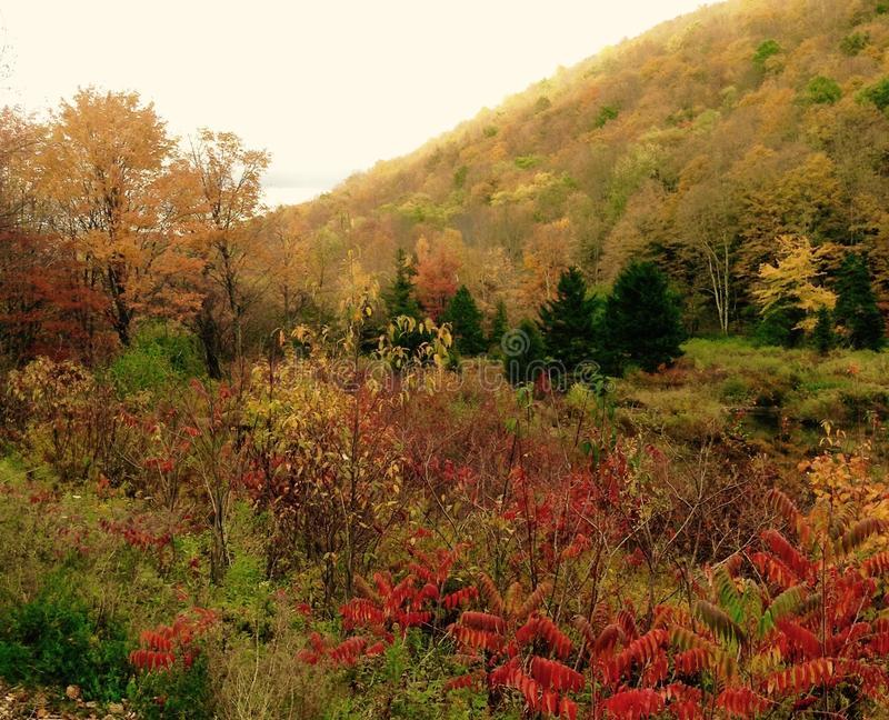 Autumn Colors in Upstate New York. A mountainside covered in trees turning gold in autumn, down to a valley with a stream dammed by beavers, upstate New York stock images