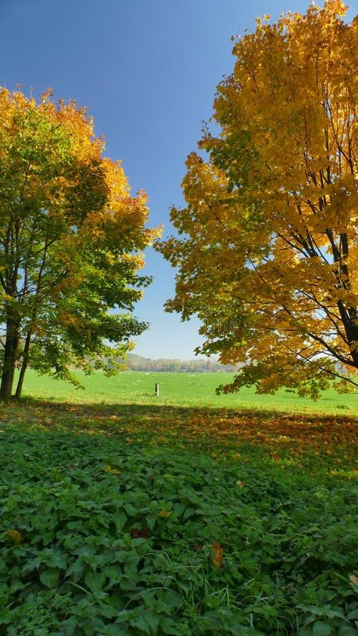 Autumn Colors Verander de kleur van de boombladeren royalty-vrije stock foto
