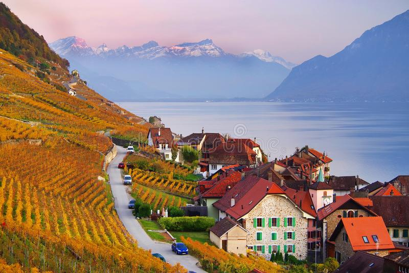 Autumn colors in a vineyard in Vaux, on the shores of Lake Leman. The famous vineyard terraces at Lake Geneva in autumn, Lavaux, Vaud, Switzerland stock photo