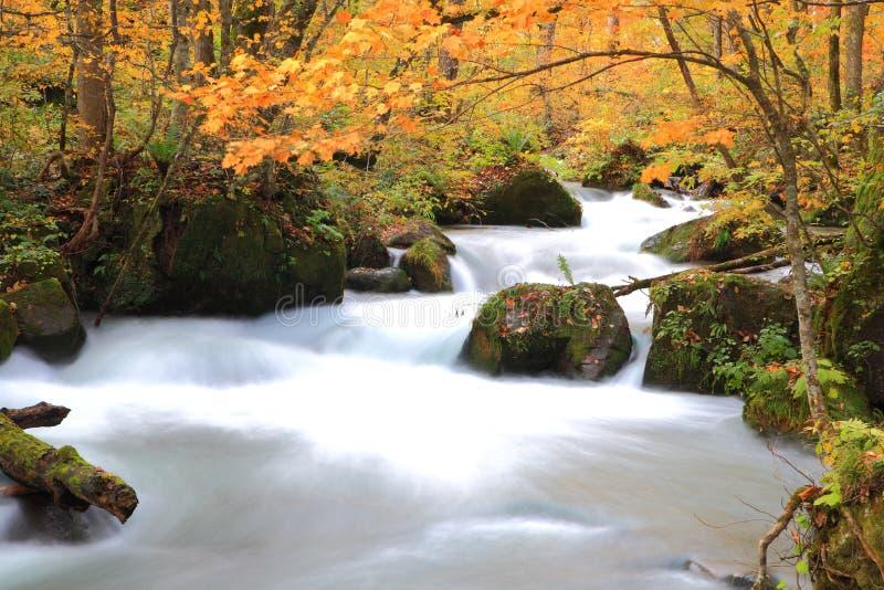Autumn Colors von Oirase-Strom lizenzfreie stockbilder