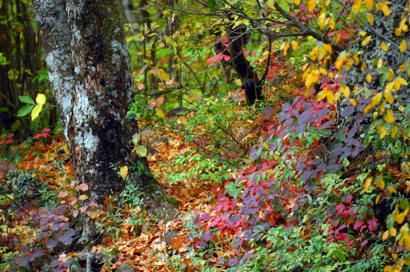 Download Autumn Colors By The Water Royalty Free Stock Photos - Image: 11769168