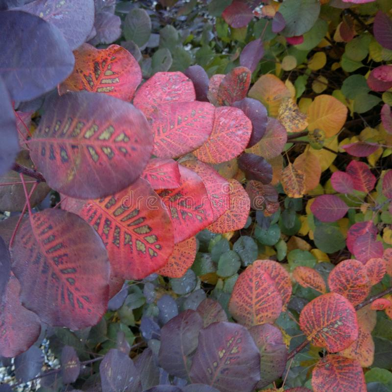 Autumn colour stock image