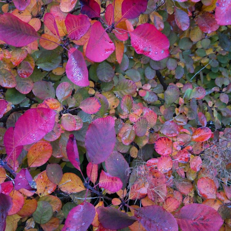 Autumn colour royalty free stock photo
