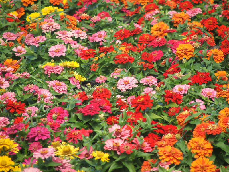 Download Autumn Coloured Little Flowers Stock Photo - Image of color, bloom: 164090