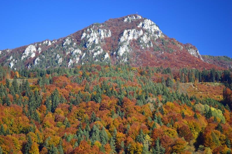 Autumn Colours - árvores em um monte em Eslováquia imagens de stock royalty free