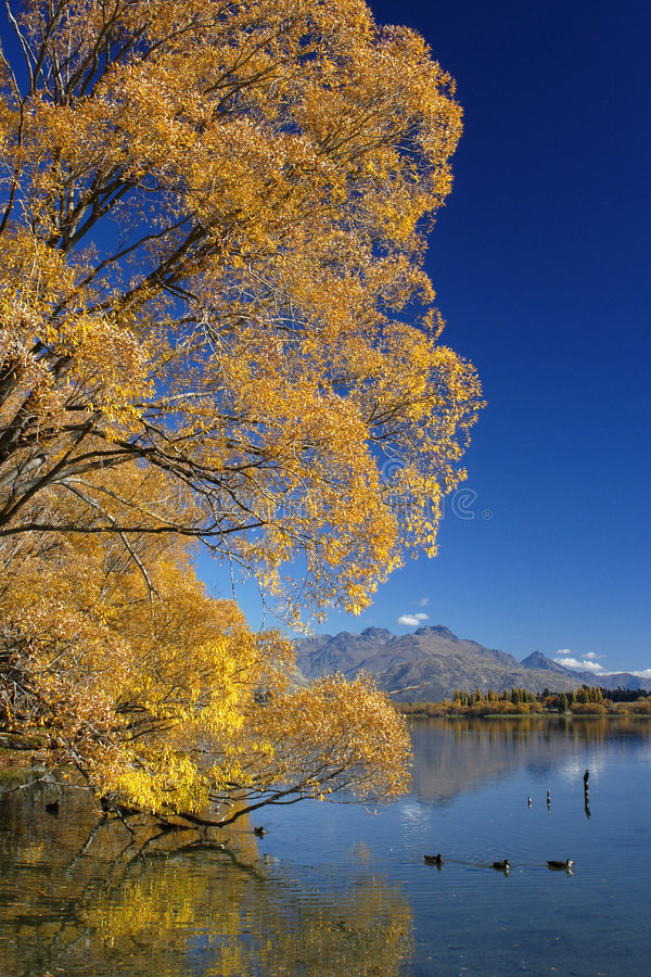 Download Autumn Colours stock image. Image of tourist, solitude, trees - 11557