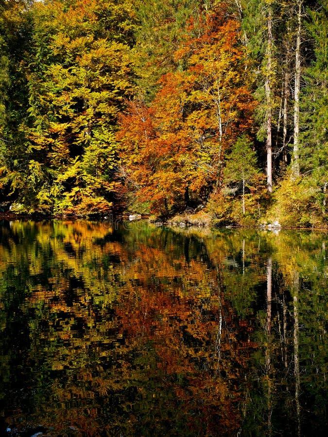 Autumn Colours photo libre de droits