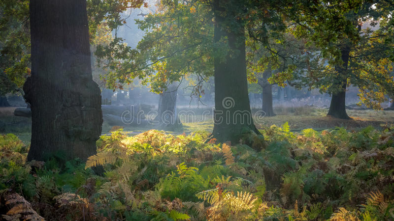 Autumn Colours royalty-vrije stock foto's