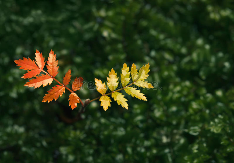 Autumn Colours stock fotografie