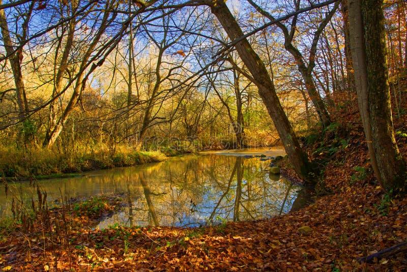 Autumn Colours ao longo de um rio do sul de Ont?rio imagens de stock royalty free