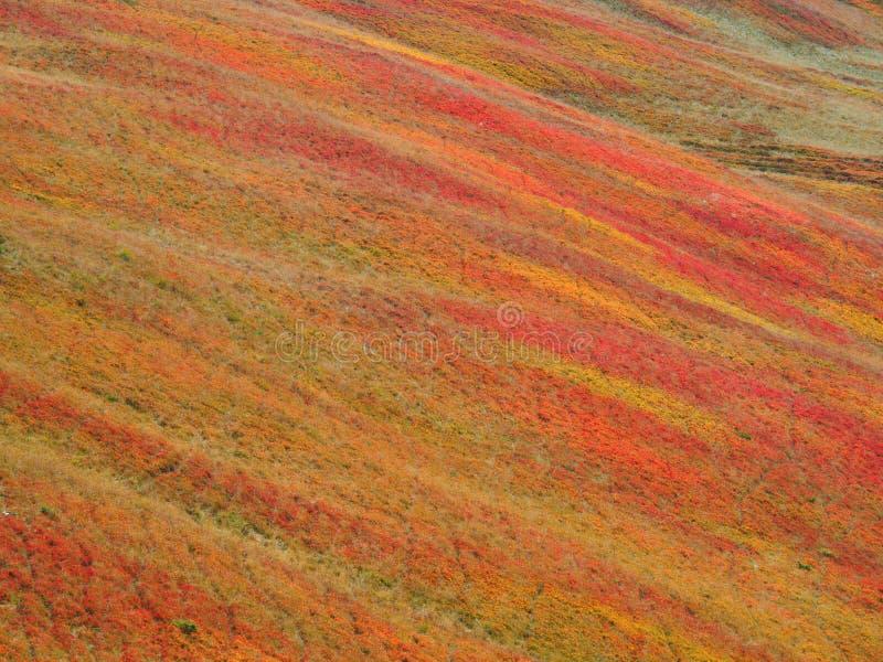 Autumn colours in Baiu Mountains, Romania. The Baiu Mountains are mountains in central Romania, a few kilometers south of BraÈ™ov royalty free stock photos