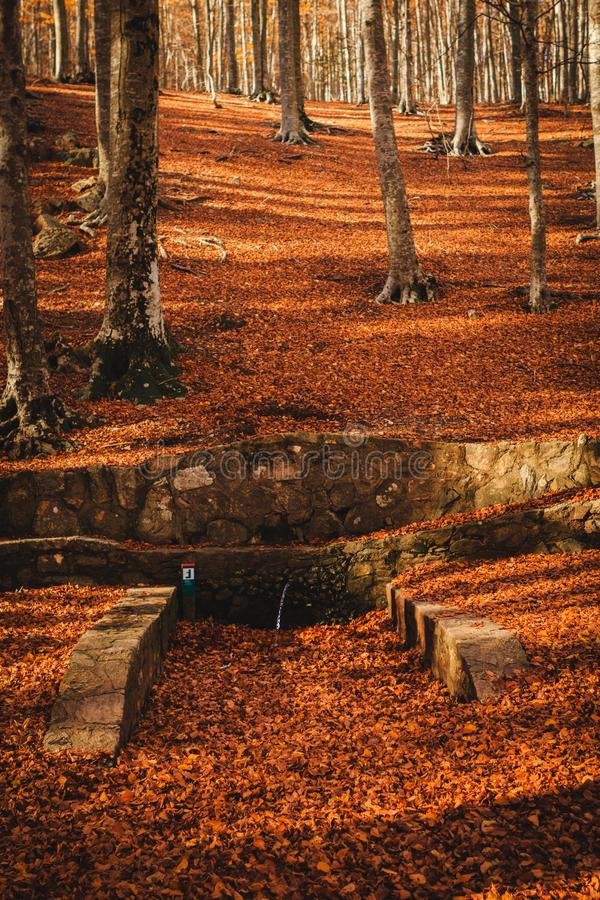 Autumn colours: beautiful landscape with brown leaves on the floor and some trees in the forest. Parc Natural del Montseny, Catalo. Beautiful autumn landscape in stock photos