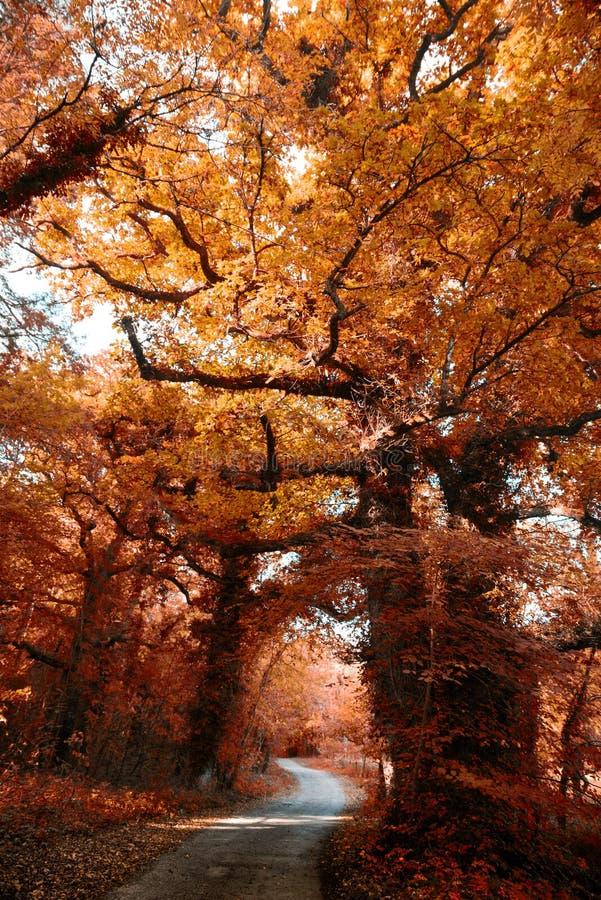 Autumn Colours en Irlanda imagenes de archivo
