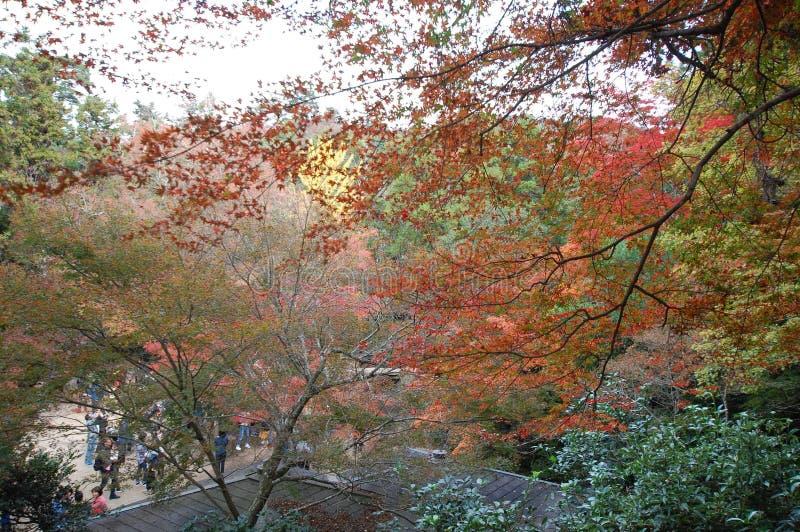 Autumn colours in the fall, Miyajima island, Hiroshima bay, Tokyo royalty free stock photography