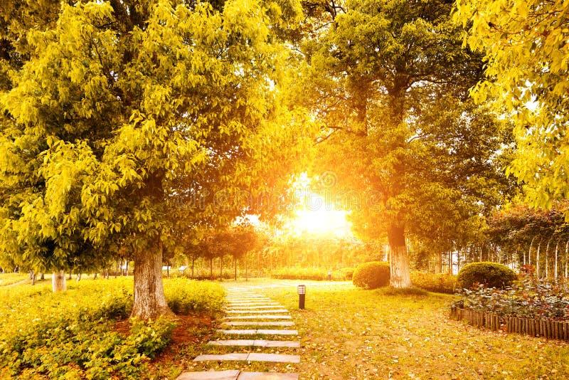Autumn Colours i Kina royaltyfri fotografi