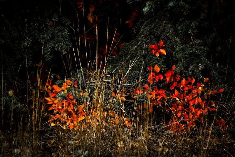 Autumn Colours i Wyoming royaltyfri bild