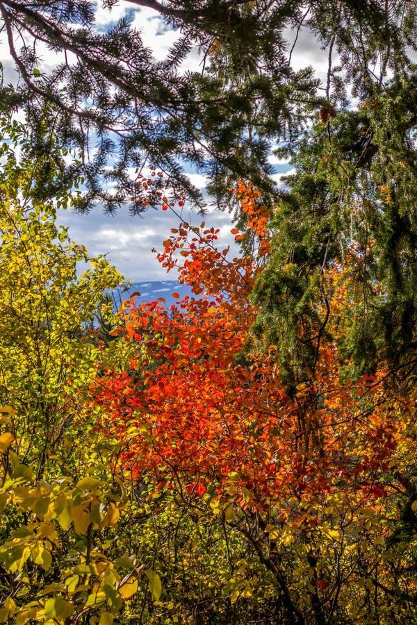Autumn Colours i Wyoming royaltyfri fotografi