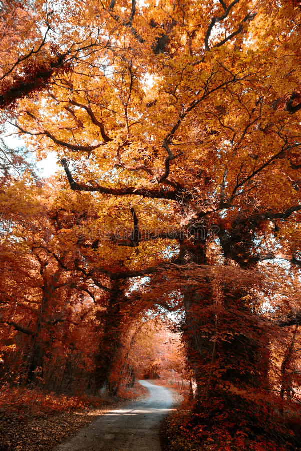 Autumn Colours in Irland stockbilder