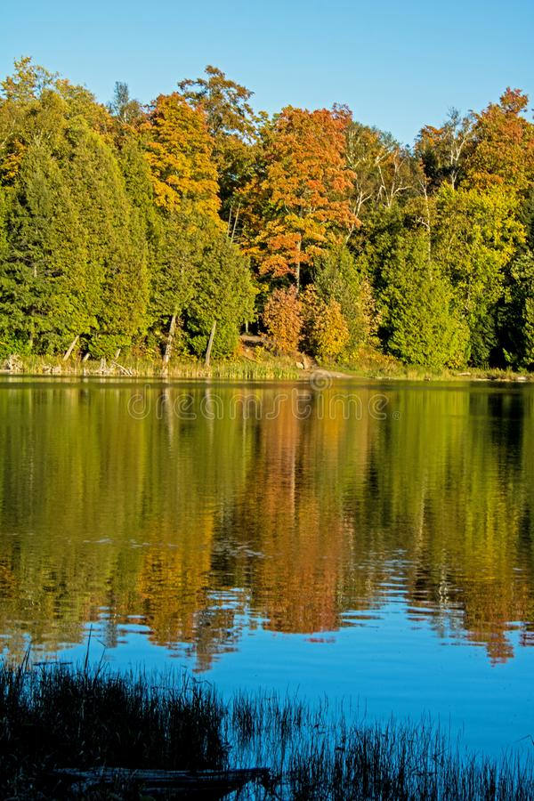 Autumn Colours Reflect In Pond vibrante imágenes de archivo libres de regalías