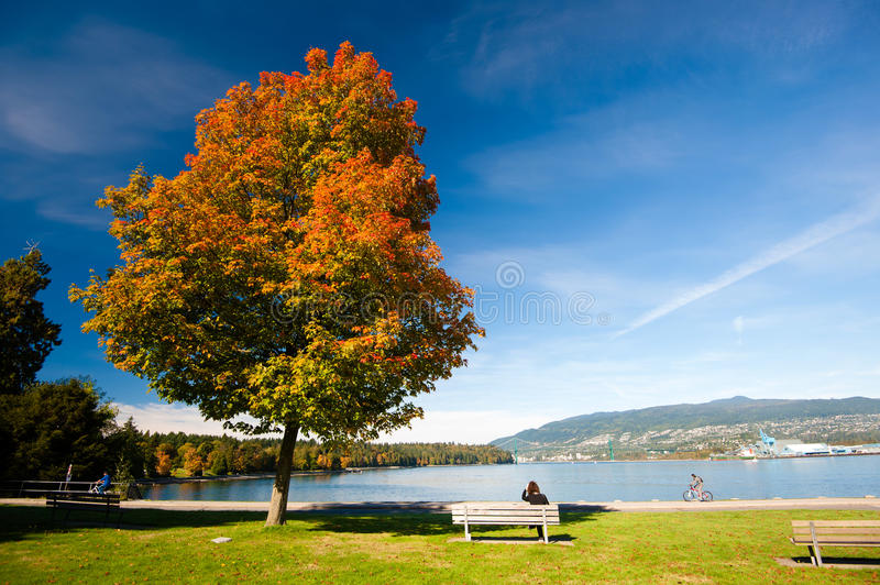 Autumn Colours - Stanley Park, Vancouver stockfoto