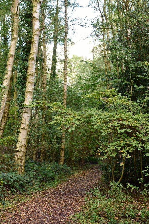 Autumn Colours, Strumpshaw-Fenn, Norfolk, England stockbild