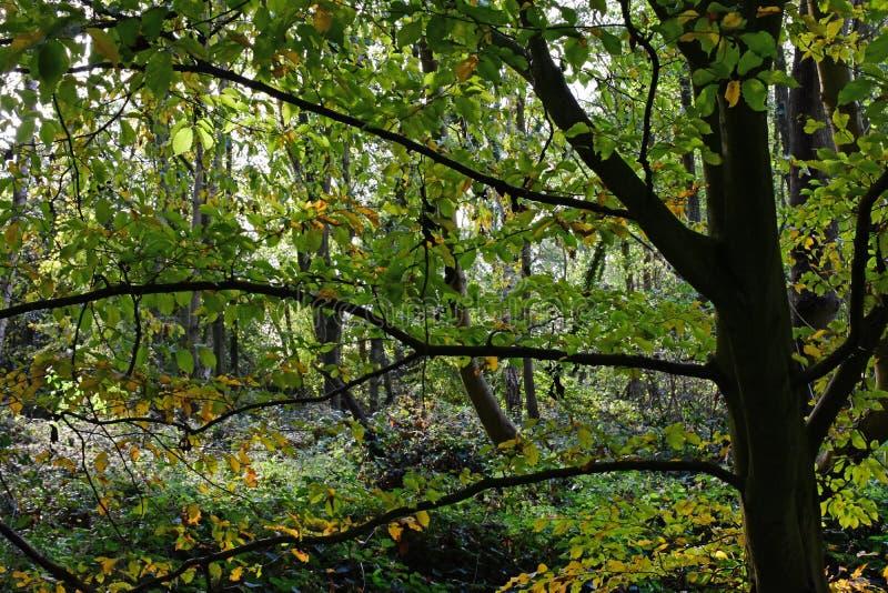 Autumn Colours, Strumpshaw-Fenn, Norfolk, England stockfotografie