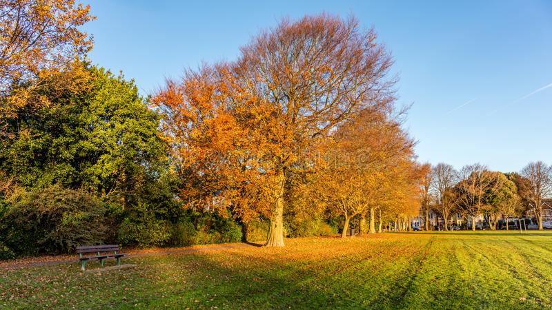 Autumn Colours on a Tree in a Park stock image
