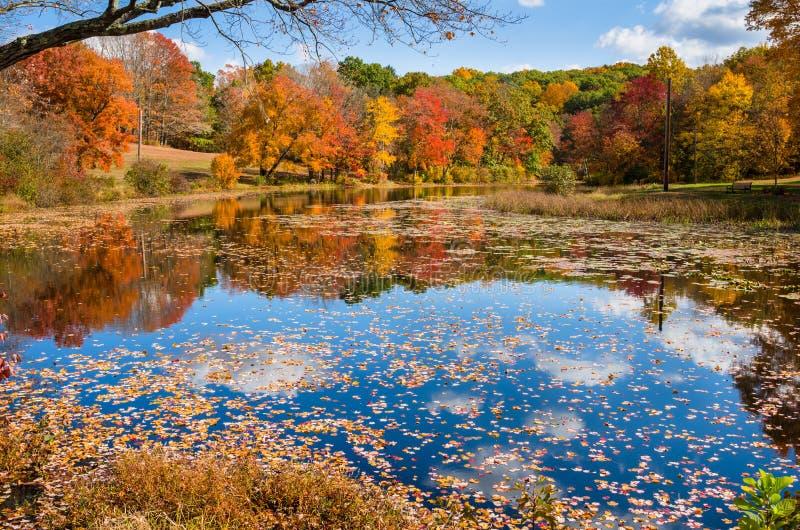 Autumn Colours y cielo claro imágenes de archivo libres de regalías