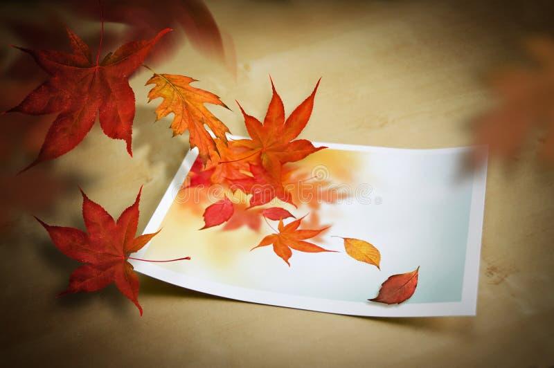 Autumn Coming To Life. Autumn concept royalty free stock photo