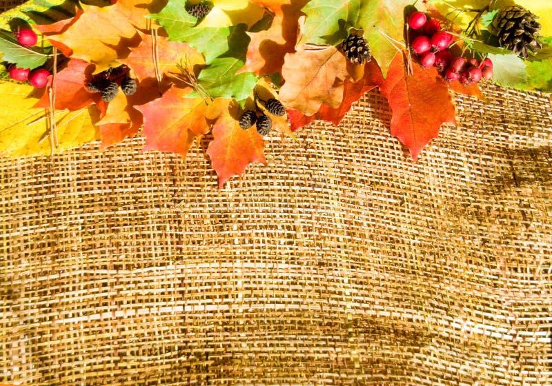 Autumn composition stock photo