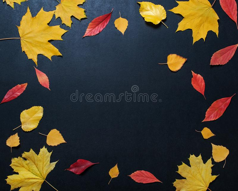 Autumn composition with color leaves ornament on balck slate board with copy space. bright maple foliage season autumn text retro. Country style flat lay top stock photo