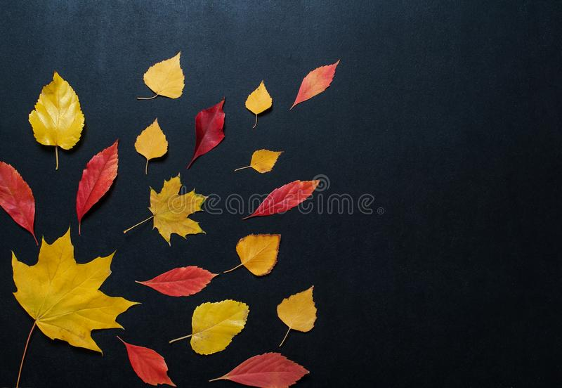 Autumn composition with color leaves ornament on balck slate board with copy space. bright maple foliage season autumn text retro. Country style flat lay top royalty free stock images