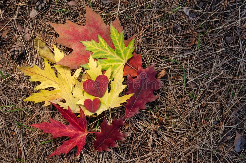 Autumn composition. Colored autumn leaves of maple and oak and two red hearts carved from leaves. Copy space royalty free stock photos