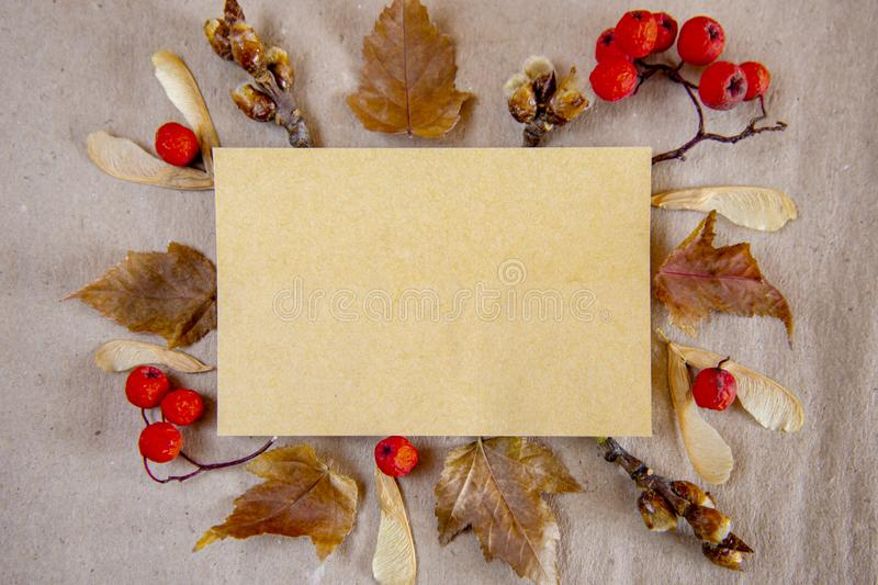 Autumn composition. Empty paper, dried flowers and leaves on a background of parchment. Autumn, fall concept. stock images