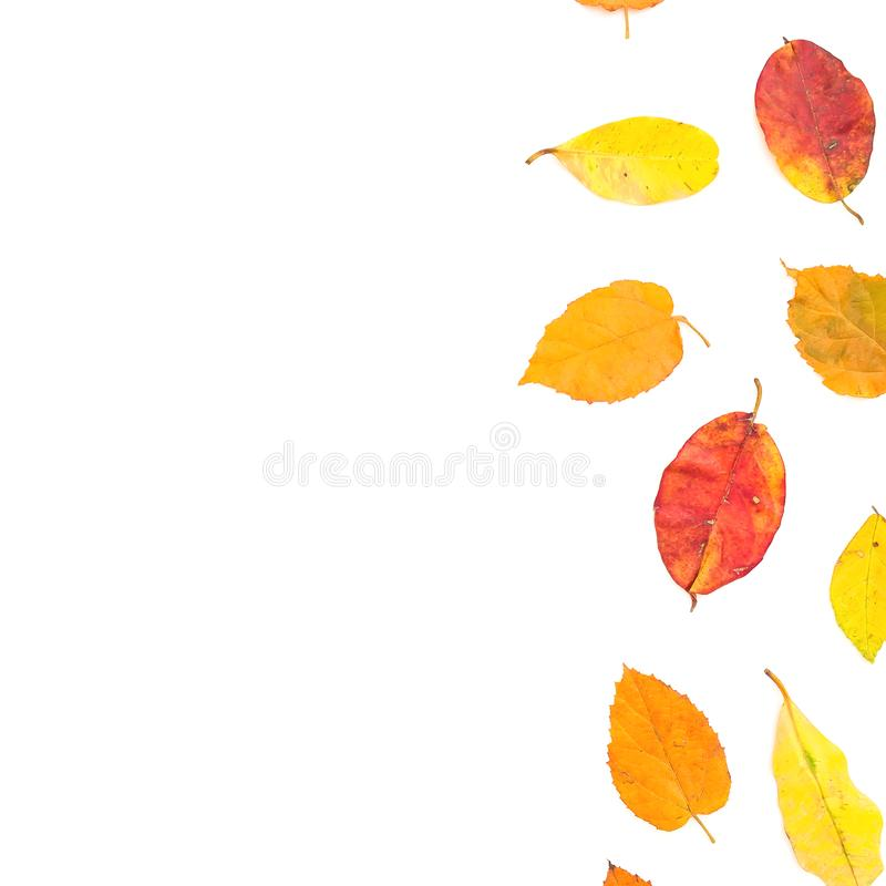Autumn composition with fall leaves on white background. Flat lay, top view. Autumnal concept royalty free stock photo