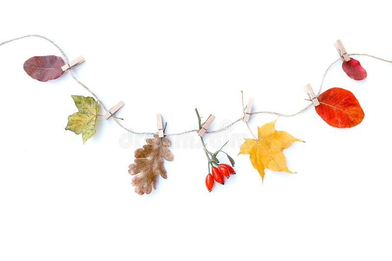 Autumn composition isolated white background. Autumn flowers and leaves, rose hip. Flat lay, top view, copy space stock image