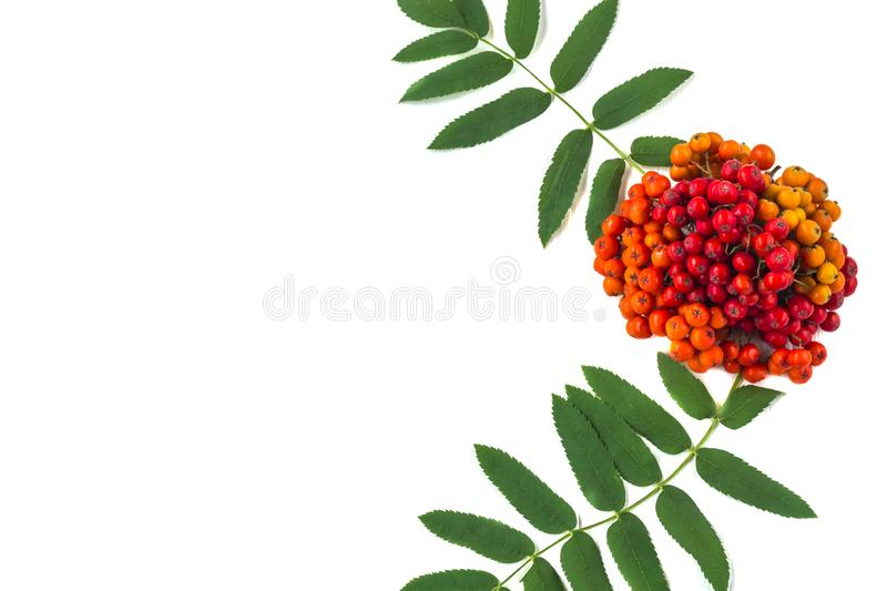 Autumn composition. Frame of leaves, rowan berries on a white wooden rustic background stock photography